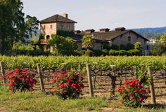 Winery Royalty Free Stock Photos