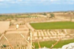winery fotografia stock