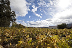 Winery. A view of vineyards next to a winery royalty free stock images