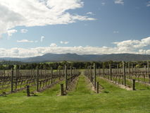Winery. View of Domaine Chandon winery in Yarra Valley, Victoria, Australia royalty free stock image
