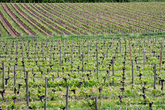 winery foto de stock