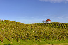 winery Photographie stock