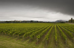 Winery. Rainclouds roll over a vineyard in Hawke's Bay, New Zealand Stock Photo