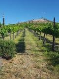 winery Obraz Royalty Free