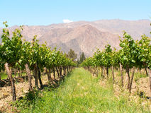 Winery. In Cafayate, northern Argentina Stock Photos