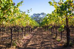 winery foto de stock royalty free