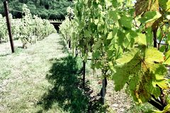 The winery of Antinori nel Chianti Classico XXIII. The winery of Antinori nel Chianti Classico Florence my city, my love stock photo
