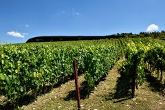The winery of Antinori nel Chianti Classico IV. The winery of Antinori nel Chianti Classico Florence my city, my love stock photos