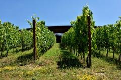 The winery of Antinori nel Chianti Classico V. The winery of Antinori nel Chianti Classico Florence my city, my love royalty free stock photos