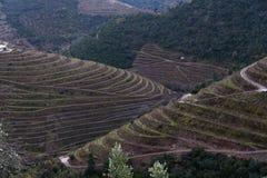 Winery area Alto Douro stock image