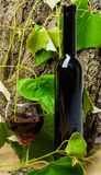Winery art concept. Bottle wine and wineglass natural environment. Sommelier recommend high quality product. Natural. Alcoholic beverage without additives. Wine royalty free stock photography
