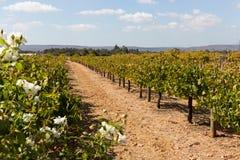 Winery in Australia Stock Photo