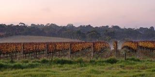 Winery in Autumn fog Stock Photos