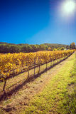 Winery during  autumn season Royalty Free Stock Images