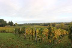 Winery during Autumn in St Emilion. Wineyards of Chateau Valandraud in St Emilion, France, during autumn Stock Photo