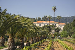 Winery behind a vineyard and palm trees Stock Images