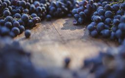 Winery brand logo background. Blue grapes on the top of wine barrel. royalty free stock photo