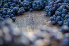 Winery brand logo background. Blue grapes on the top of wine barrel. royalty free stock image