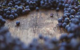 Winery brand logo background. Blue grapes on the top of wine barrel. Winery brand logo background. Blue grapes on the top of wine barrel with blurry background royalty free stock photo