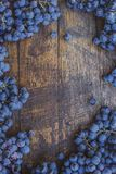 Winery brand logo background. Blue grapes on the top of wine barrel. stock photos