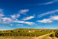 Winery Building and Vineyard-Provence,France Royalty Free Stock Photography