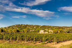 Winery Building and Vineyard-Provence,France Stock Photo