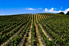 Winery California Stock Photos