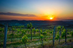 Winery in the Chianti region. Italy. Tuscan winery at the sunset light Royalty Free Stock Images