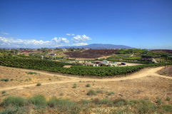 Winery in the Desert. A winery in the midst of desert land Royalty Free Stock Photo