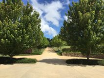 Winery. Driveway tree lined Australia Stock Image