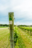 Winery on Eastern Shore of VA stock image