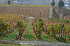 Winery in the fall Stock Photography