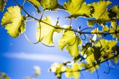 Winery Farm Stock Photography
