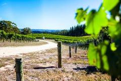 Winery Farm Royalty Free Stock Photos