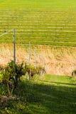 Winery Field Royalty Free Stock Photo