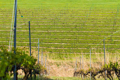 Winery Field Royalty Free Stock Photography