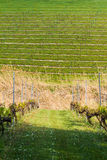Winery Field Stock Photography