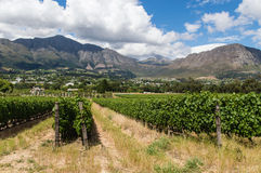 Winery Franschhoek Stock Photography
