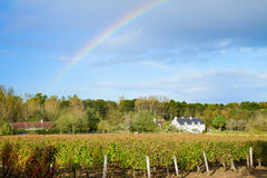 Winery garden after rain Stock Photos