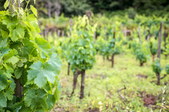Winery Royalty Free Stock Images