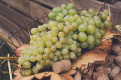 Winery, grape harvest, farmers food market Royalty Free Stock Photo