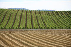 Winery and Hay Field Patterns Royalty Free Stock Photo