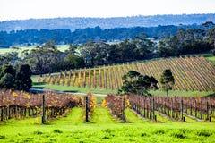 Free Winery In Autumn On Mornington Peninsula. Royalty Free Stock Images - 148967029