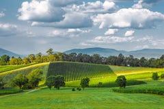 Winery landscape royalty free stock photos