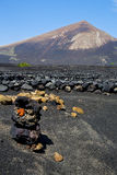 Winery lanzarote    cultivation viticulture Stock Images