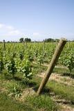 Winery on Long Island Royalty Free Stock Image