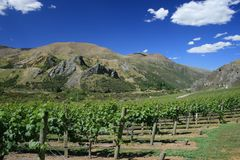 Winery mountain scene New Zealand Royalty Free Stock Photo