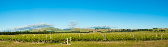 Winery of New Zealand Royalty Free Stock Photo