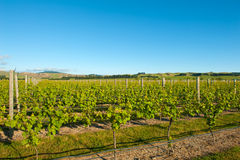 Winery of New Zealand Royalty Free Stock Photos
