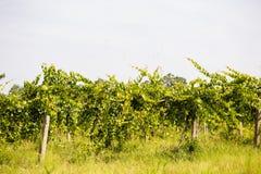 Winery Stock Photo